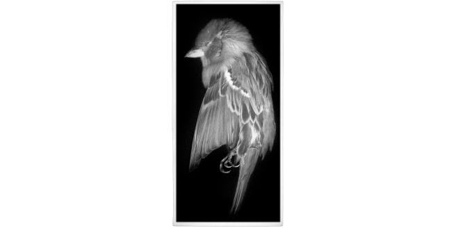 Wings - Bird Body